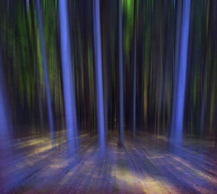 moving forest 2012 photography blue abstract effect