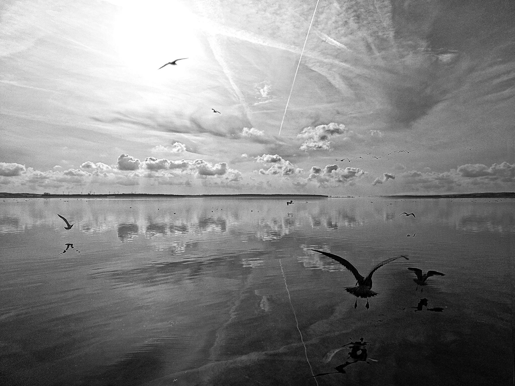 salt lagoon b&w 2014 photography water birds nature sea