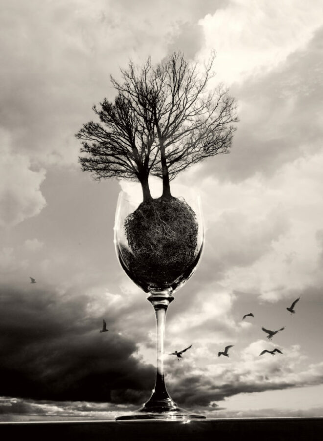 Glass Of Trees BW 2016