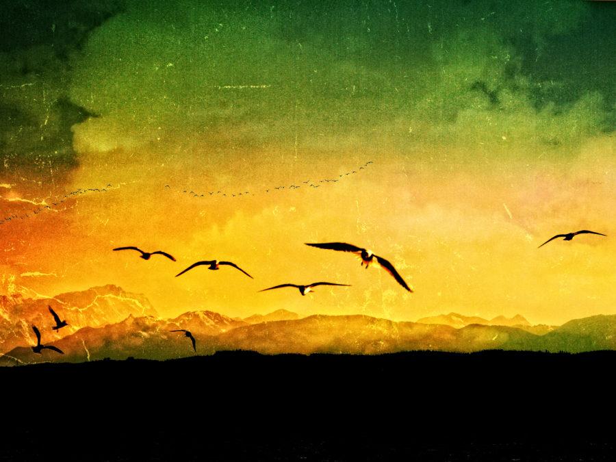 horizon yellow 2015 photography composing mountains clouds birds green contrast art