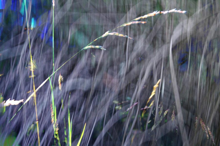 Grass Lights 2017