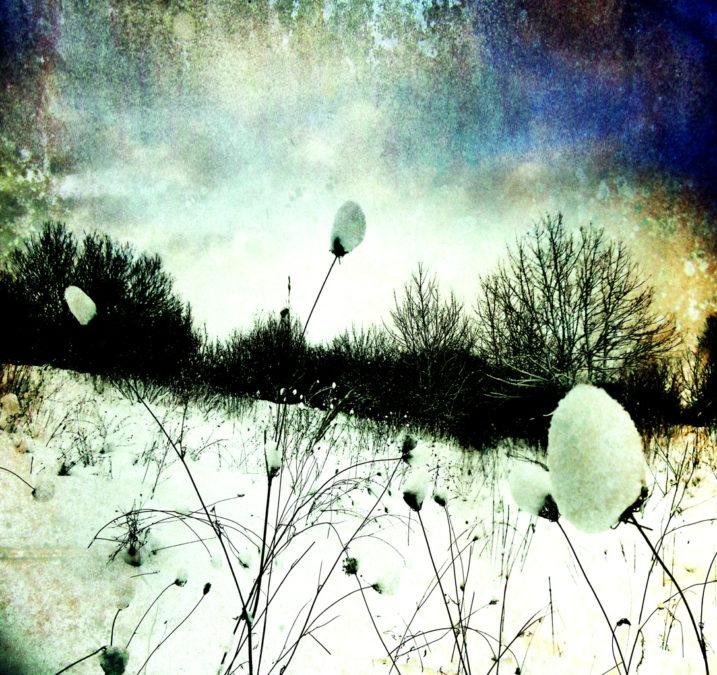 Snow Burs Textured 2012