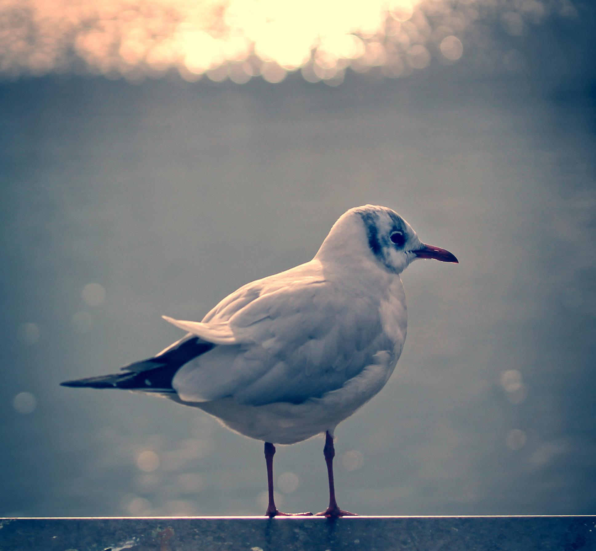 Gull 2017