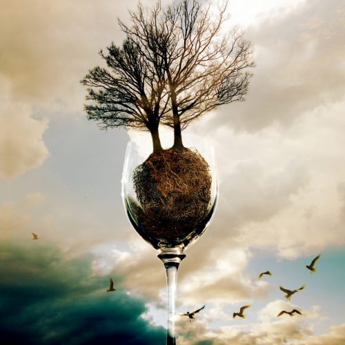 glass of trees 2015 photo composing with couds and birds
