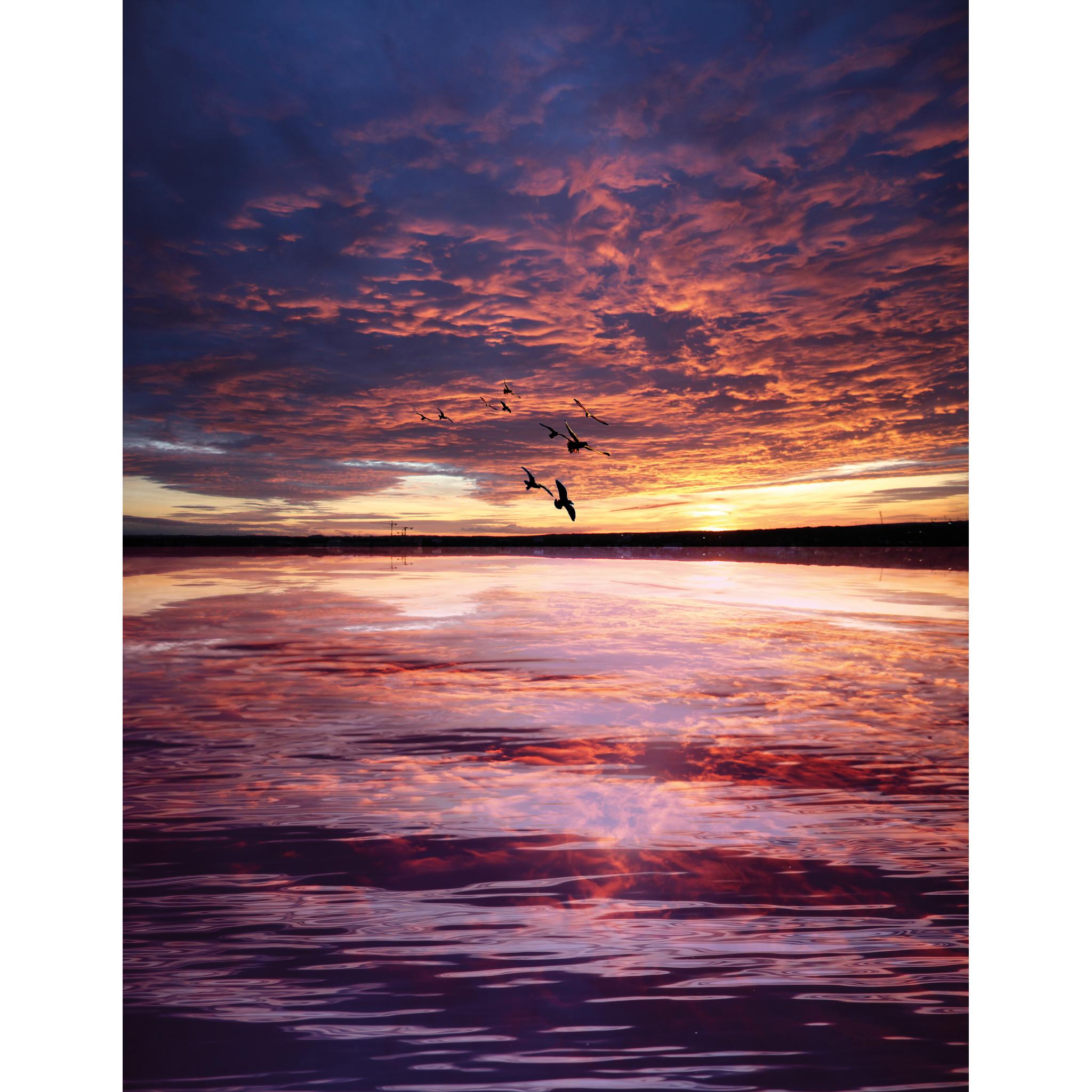 Reflektion, Wasser, Sonnenuntergang, Vögel, Red
