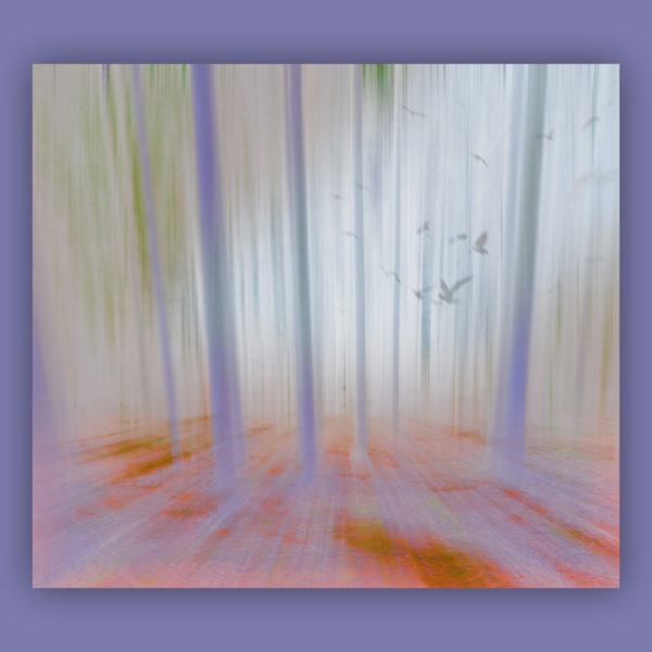 abstract, pink, blur, digital, forest, light, nature, photography, pattern, surreal, trees, texture, wood,