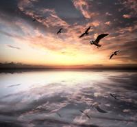 HEAVEN CLOSE TO THE SEA