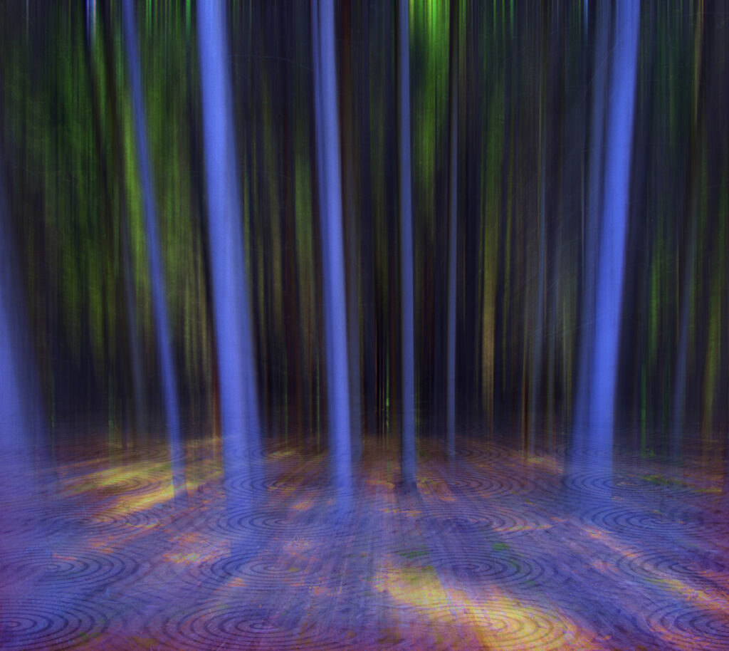 Blue Forest 2015
