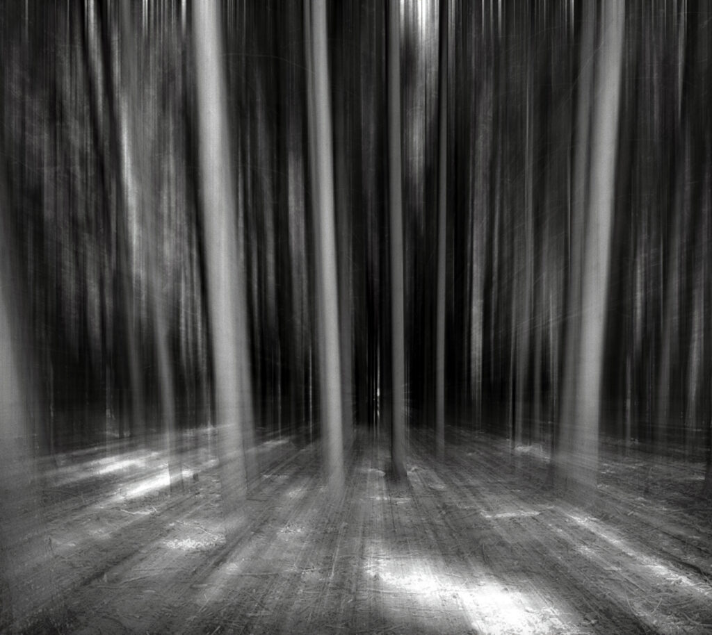 Moving Forest B&W 2012